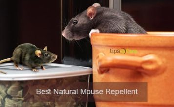 natural mouse repellent