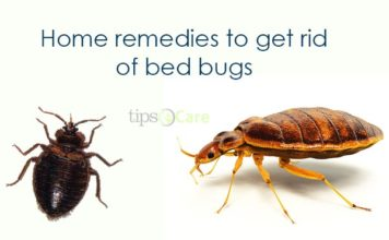 home remedies to get rid of bed bugs