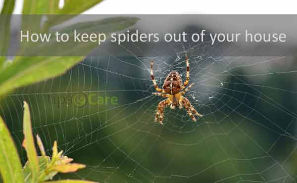 how to keep spiders out of your house